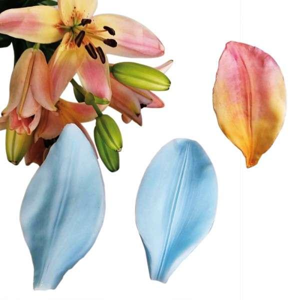 """Veiner """"Asiatische Lilie - Blütenblatt"""""""