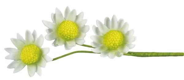 Ausstecher Gänseblümchen