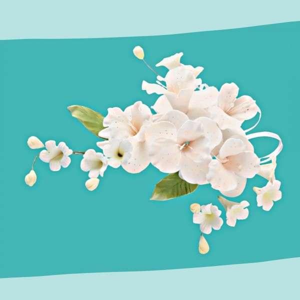 Zuckerbumenbuquet Dendrobie Pfirsisch Vorschaubild