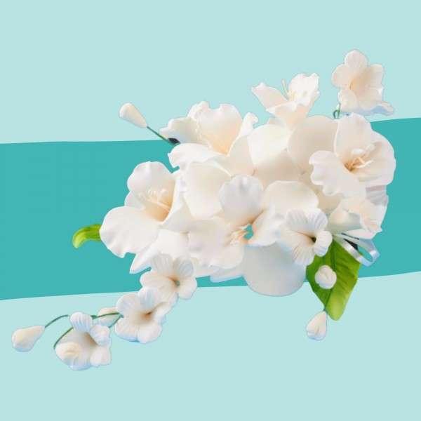 Zuckerblumenbouquet Dendrobie Vorschaubild